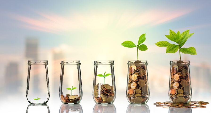 Coin Jars Growing Seedlings